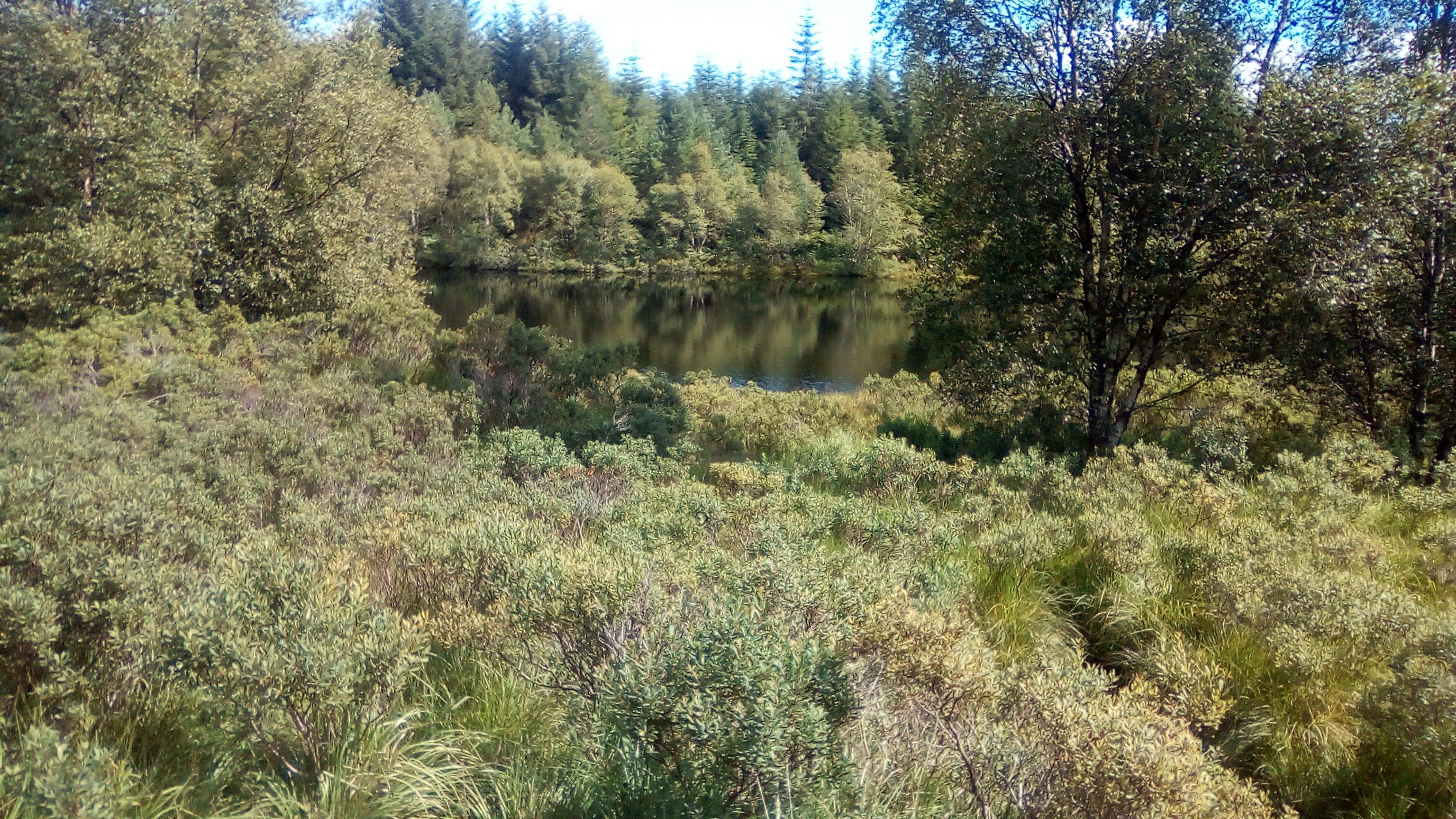 Small lake and trees